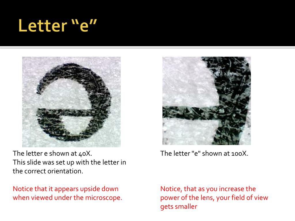 Microscope Lab Activity Letter E Answers