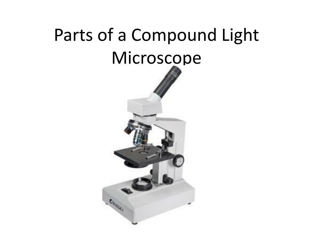 Body Tube Microscope Definition