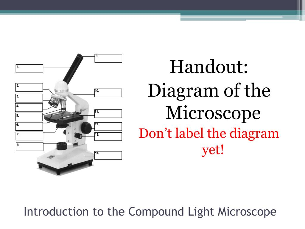 Parts Of A Microscope Blank Worksheet