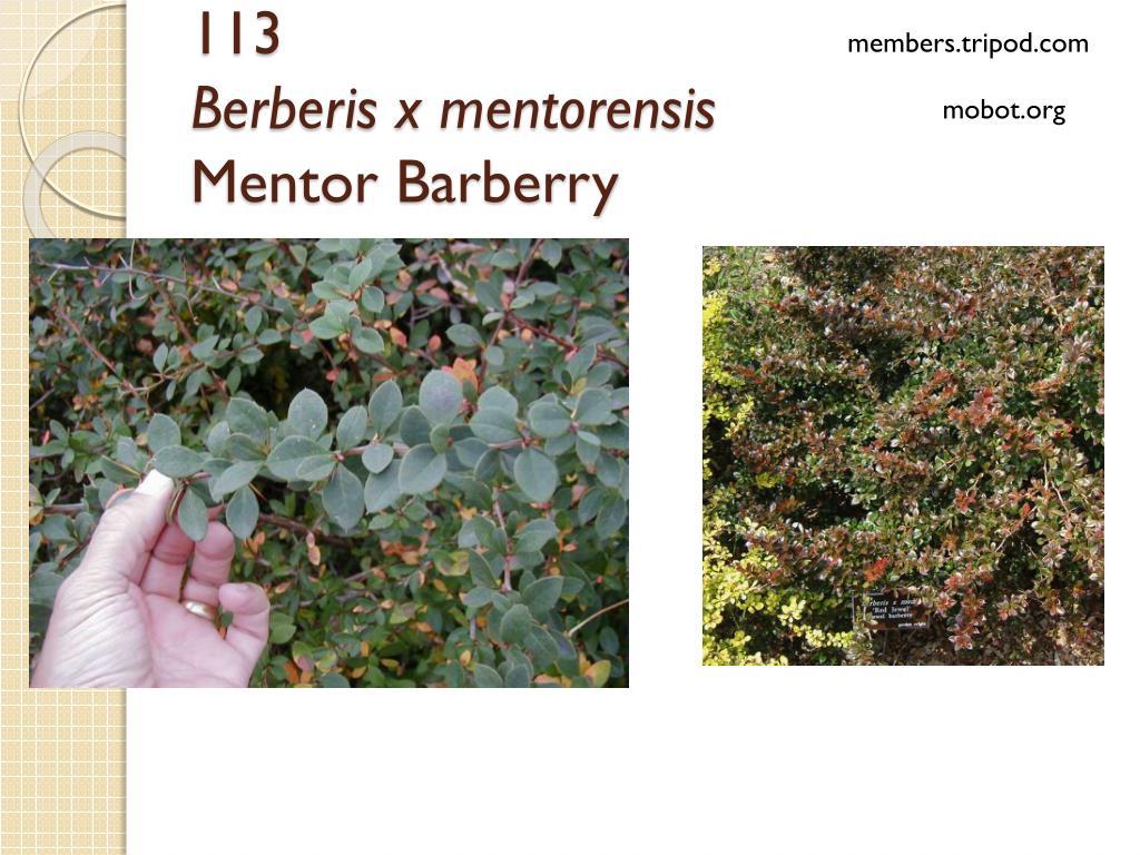 Ppt Nursery Landscape Plant Identification Powerpoint