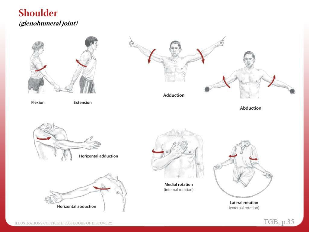 Anatomy Body Movements