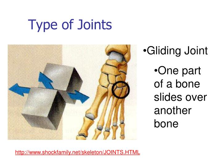 Joint And Forth Allows Back Slide Type Other Bones Beside What Bones