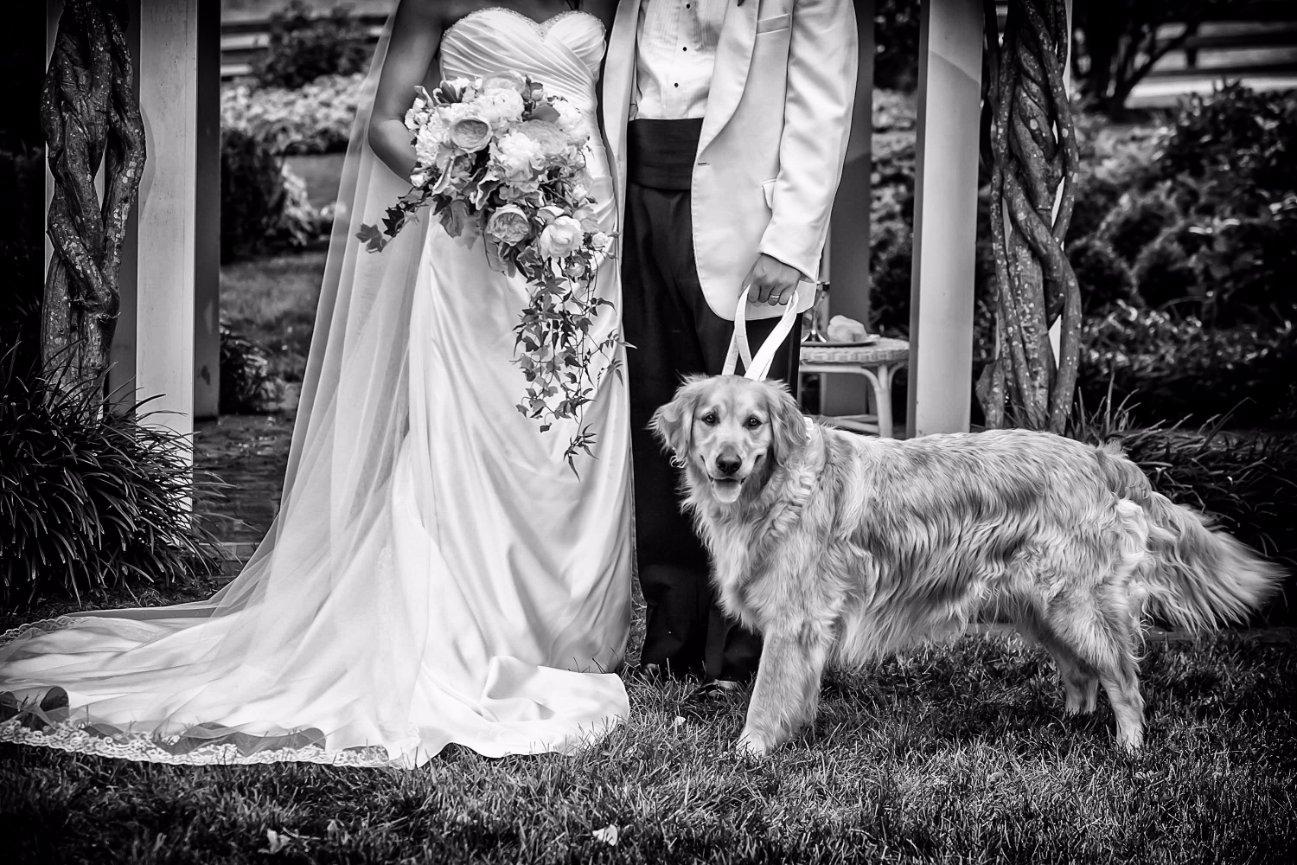 Faq About Lynchburg Wedding Photography