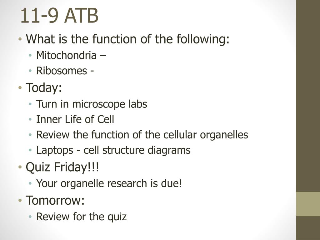 Cell Organelle Research Worksheet