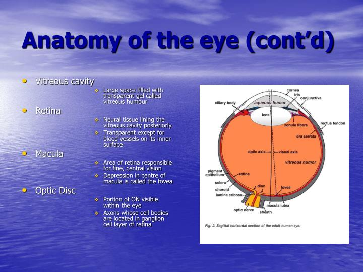 PPT - Diabetic Retinopathy PowerPoint Presentation - ID ...