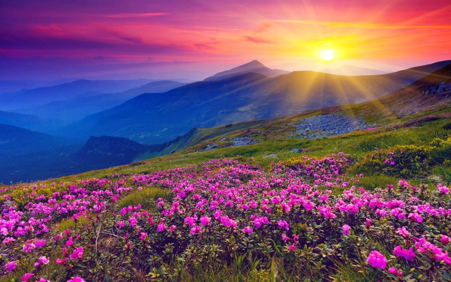 VALLEY OF FLOWERS Photos, Images and Wallpapers, HD Images, Near ...
