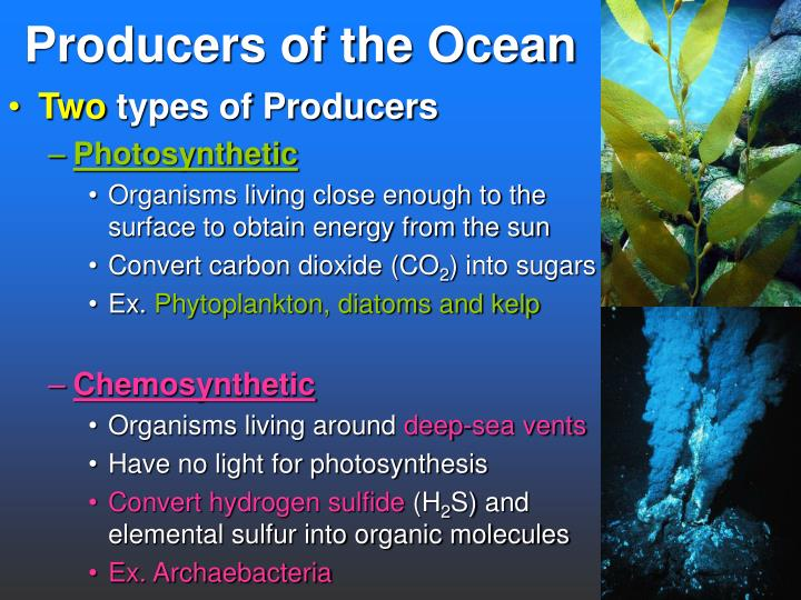 Marine Biome Secondary Consumers