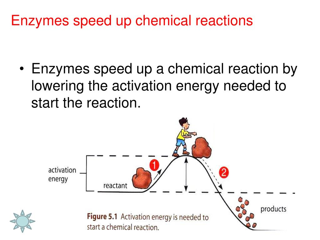 How Do Enzymes Speed Up Chemical Reactions