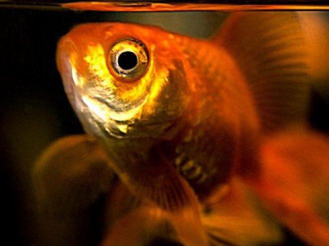 Odoše leće ribama. Moramo kupiti nove.