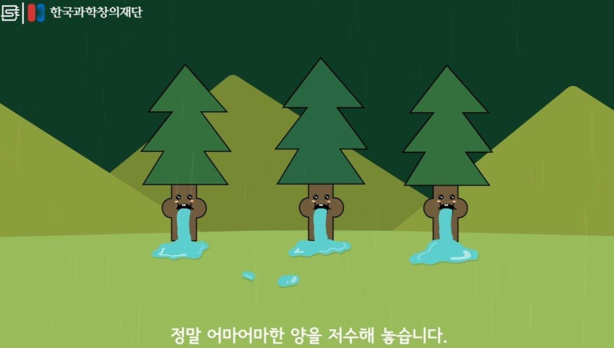 20200808_173954.jpg 초딩도 이해하는 태양광 때문에 잘린 나무가 하는일.jpg