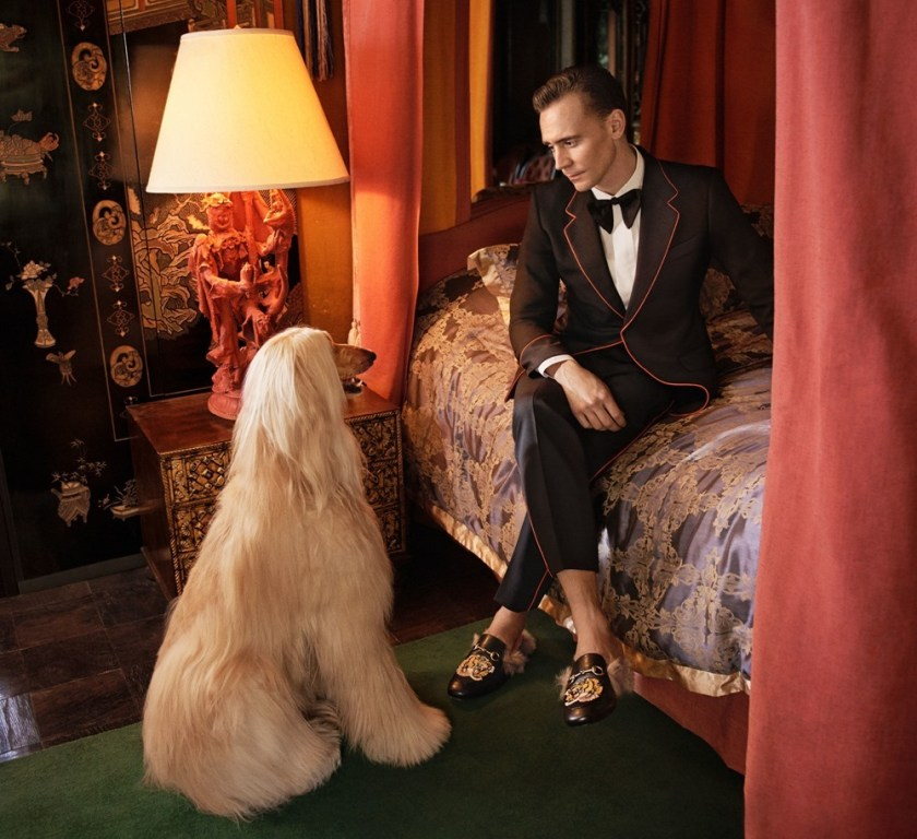 CAMPAIGN Tom Hiddleston for Gucci Cruise 2017 Men Tailoring by Glen Luchford. www.imageamplified.com, Image Amplified (4)