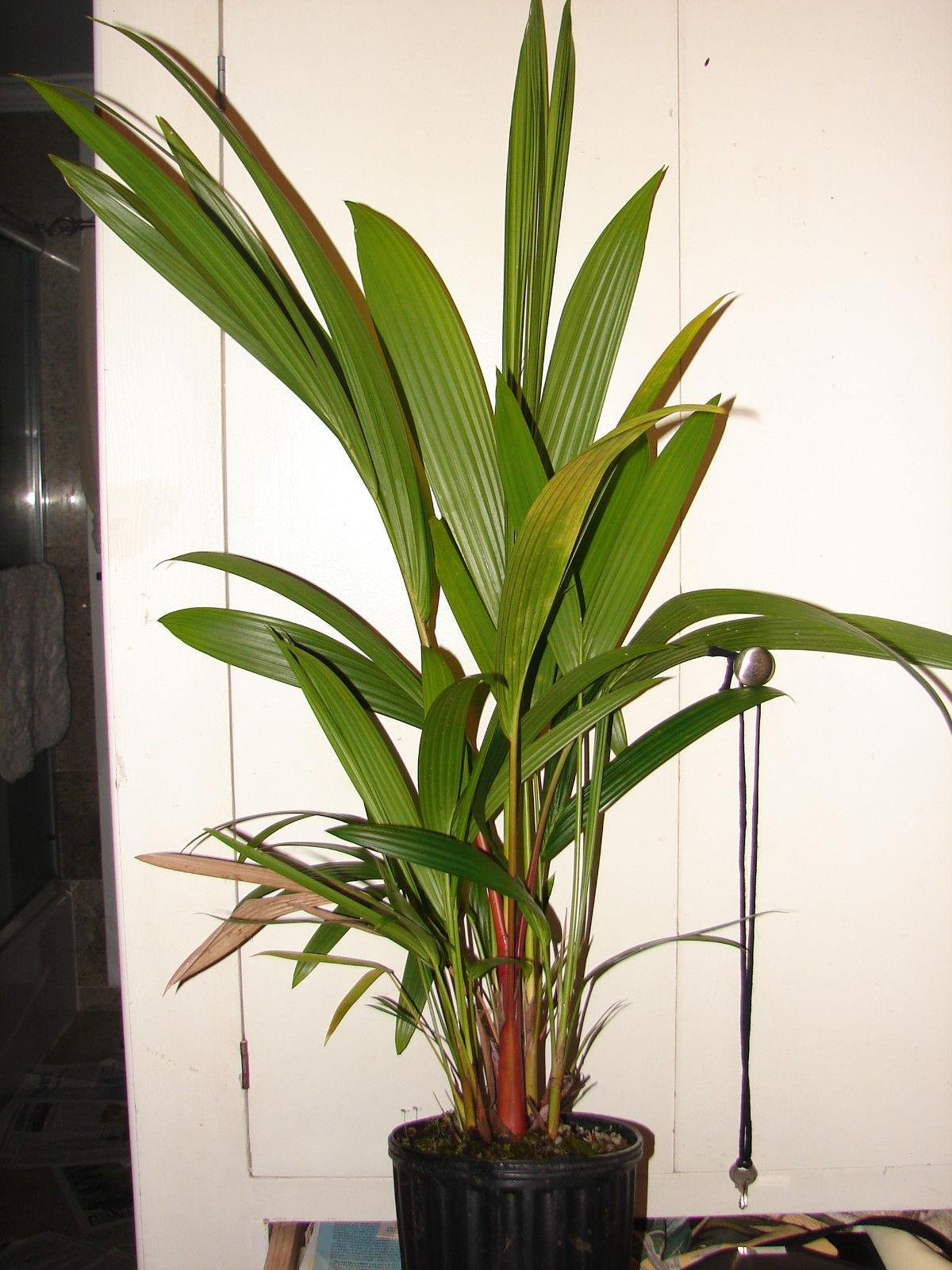 Most Beautiful Succulents