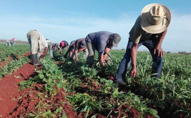 100 millones de mexicanos en situación de pobreza o con alguna carencia social o de ingreso – Imagen Agropecuaria