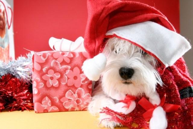 Perritos en navidad