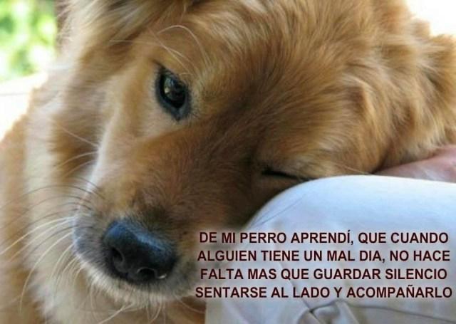 Imagenes de Perros Con Frases Para Amigos Fieles