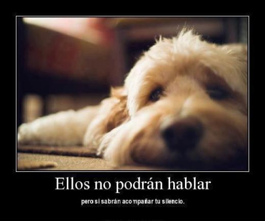 Los perros Los Mejores Amigos.