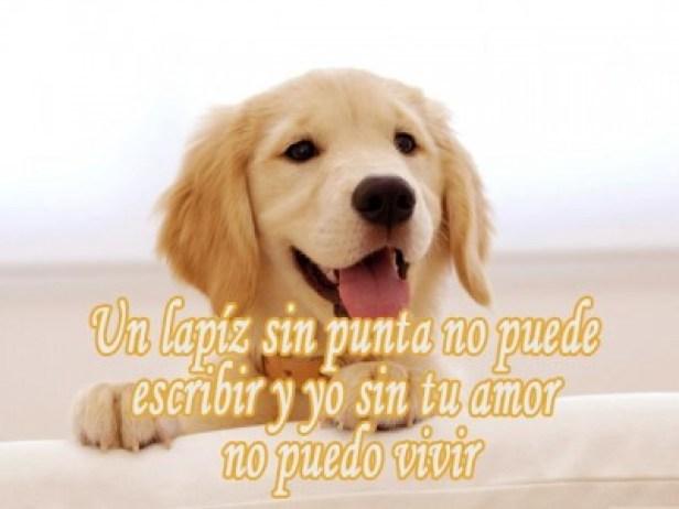 Versos de amor con perritos
