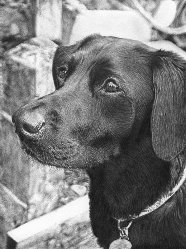 preciosos dibujos de perros a lapiz