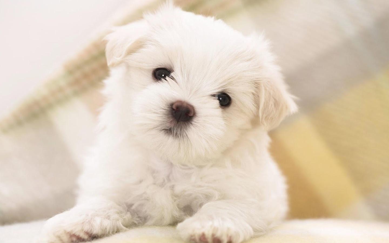 Fondos de pantalla de cachorros tiernos imagenes de perros - Best dogs for small spaces pict ...