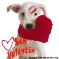 Imagenes De Perros Feliz San Valentin