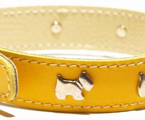 Imagenes de collares de perros