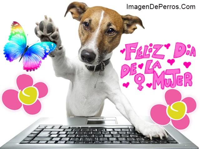 Imagenes de perros para desear feliz dia de la mujer