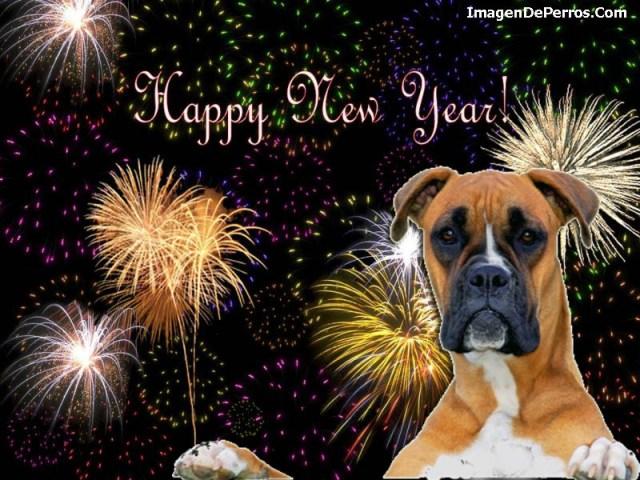 happy-new-year-en-imagenes-con-perros
