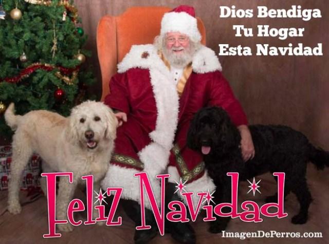 imagenes-de-perros-feliz-navidad
