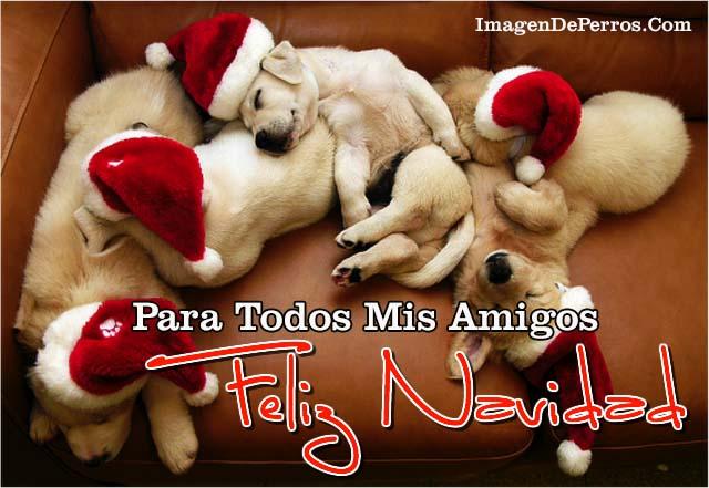 imagenes-para-dar-feliz-navidad-con-perritos
