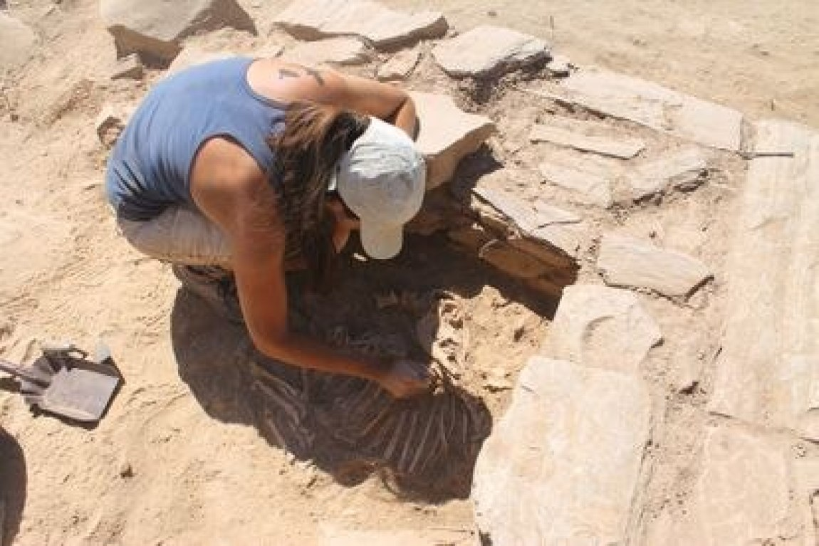 An archaeologist extracts the remains of a goat at the El Castillón site.