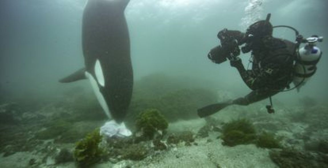 Photographer Brian Skerry sees an orca hunting in the documentary 'The Secrets of the Whales'.