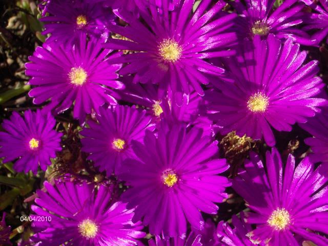 el purpura related keywords suggestions el