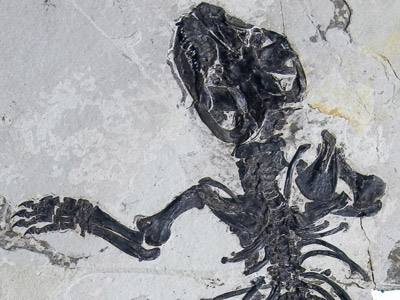 Aspecto del fósil.