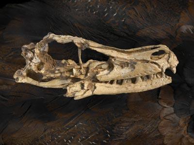 El velocirraptor podía medir más de dos metros. Science