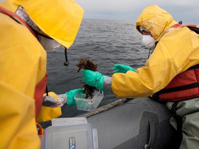 Activistas de la organización ecologista recogen muestras marinas.GREENPEACE