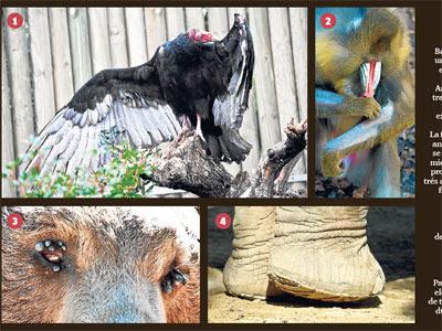 Algunos ejemplos de los animales maltratados