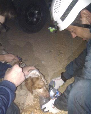 Imagen del perro el pasado sábado, cuando fue rescatado.