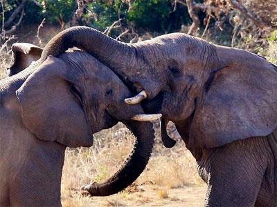 Foto de archivo de elefantes. EFE