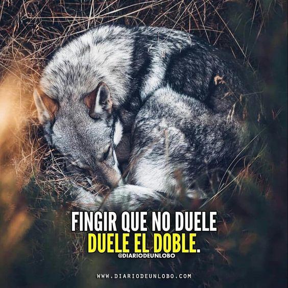 Imagens De Lobos Com Frases Mmod