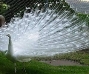 Imagenes De Aves Blancas