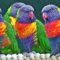 imagenes de aves exoticas para fondo de Pantalla