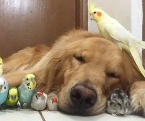 Imágenes De Tipos De Aves Domésticas