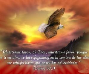 Imagenes Cristianas De Aves
