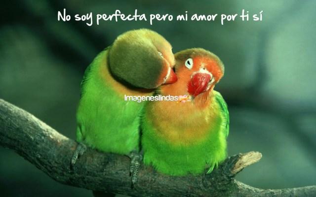 Frases De Amor Para Dedicar En Imagenes De Aves