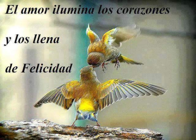 Imagenes de aves con mensajes sobre el amor