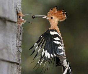 Descargar Imagenes Bonitas De Aves Para Fondo De Celular