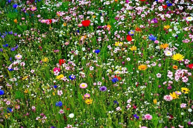 Fondo de pantalla de un campo de flores