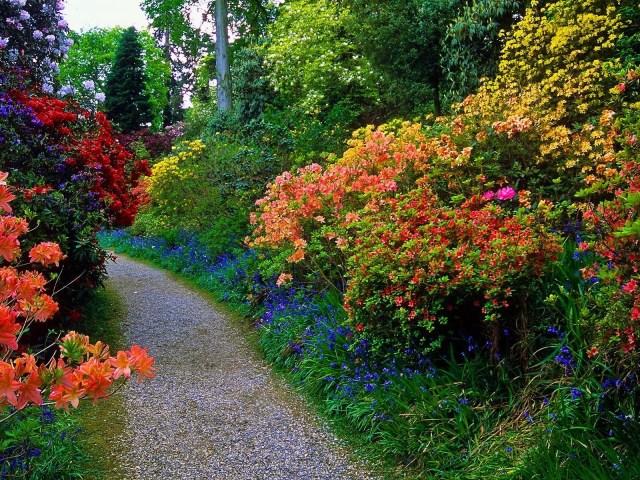 Fotos de jardines de flores para fondo de escritorio