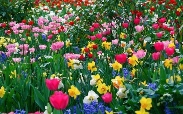 Hermoso campo de flores para fondo de pantalla