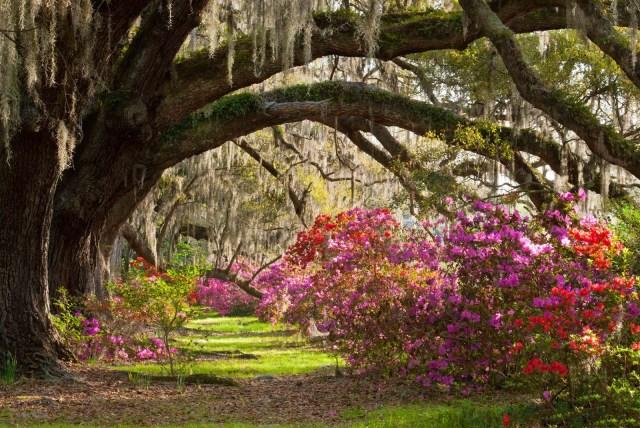 Imagenes De jardines Con Flores Para Usar Como Fondo De Pantalla
